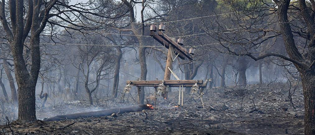 Φωτιά στα Γεράνεια Όρη - Αμυράς:  Και το τελευταίο μέτρο καμένης έκτασης θα πρασινίσει ξανά