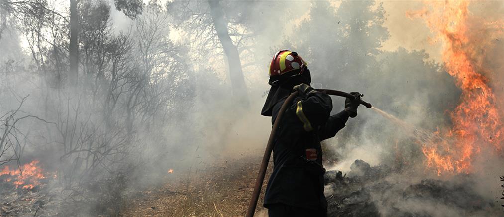 Φωτιά στον Σχίνο: Εκκένωση οικισμών στο Αλεποχώρι