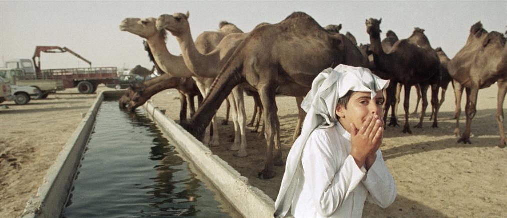 """Σαουδική Αραβία: βάζουν """"τσιπάκια"""" στις καμήλες"""