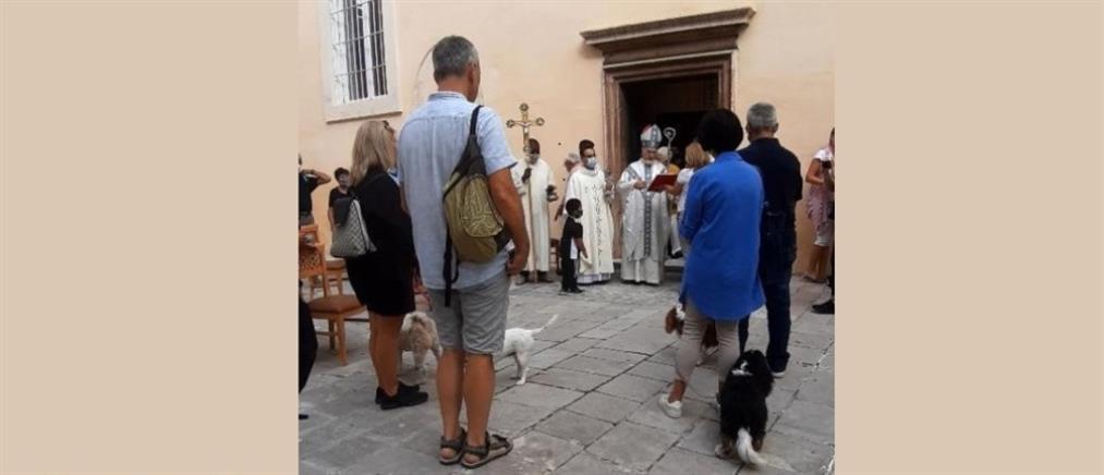 Κέρκυρα: Το έθιμο της ευλογίας των ζώων στον Άγιο Φραγκίσκο της Ασίζης