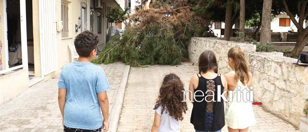 Παραλίγο τραγωδία σε παιδική χαρά – Πτώση δέντρου ξυστά από παιδιά