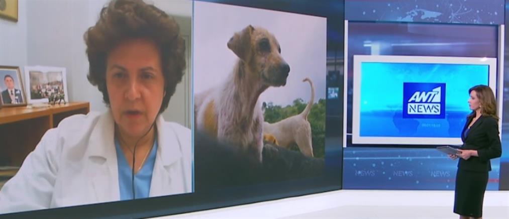 Η Αθηνά Τραχήλη στον ΑΝΤ1 για τον κορονοϊό και την φροντίδα ζώων συντροφιάς (βίντεο)