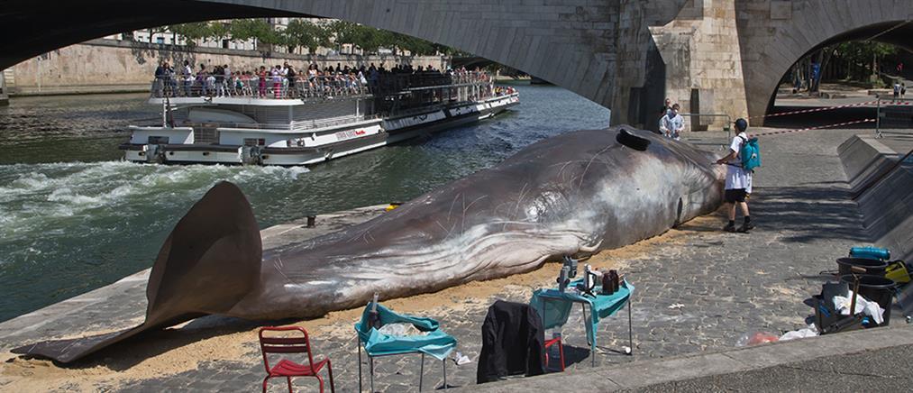 Σοκ στη θέα …φάλαινας στις όχθες του Σηκουάνα (βίντεο)