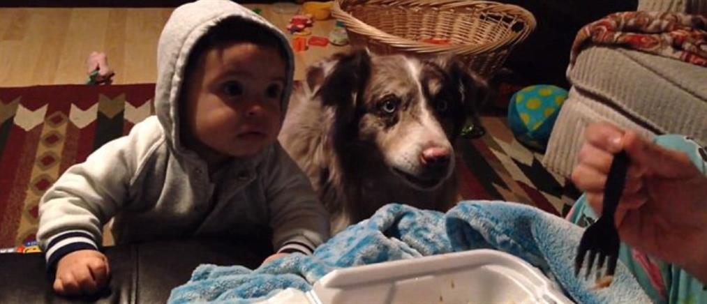 """Το μωρό ή το σκυλί θα πει πρώτο """"Μαμά"""" για να φάει;"""
