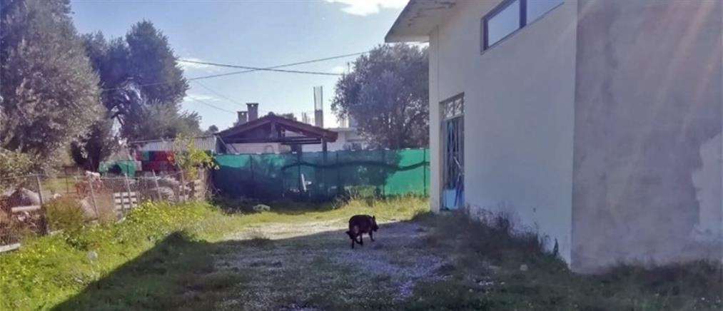 Μαζική δηλητηρίαση σκύλων στην Κρήτη (εικόνες)