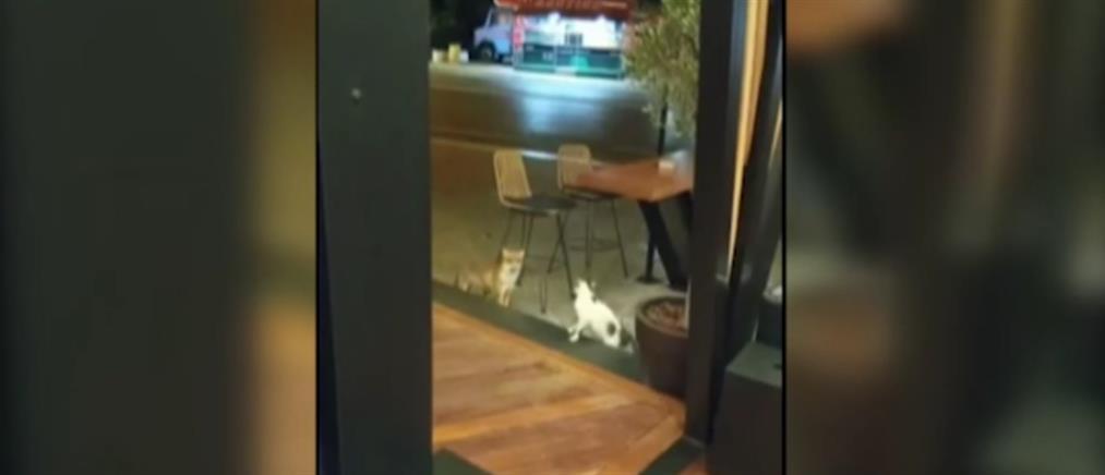 """Βαρυμπόμπη: Αλεπού και γάτα είχαν """"τετ α τετ"""" σε καντίνα (βίντεο)"""