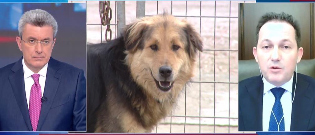 Πέτσας στον ΑΝΤ1: Αυστηρότερες ποινές για την κακοποίηση ζώων (βίντεο)