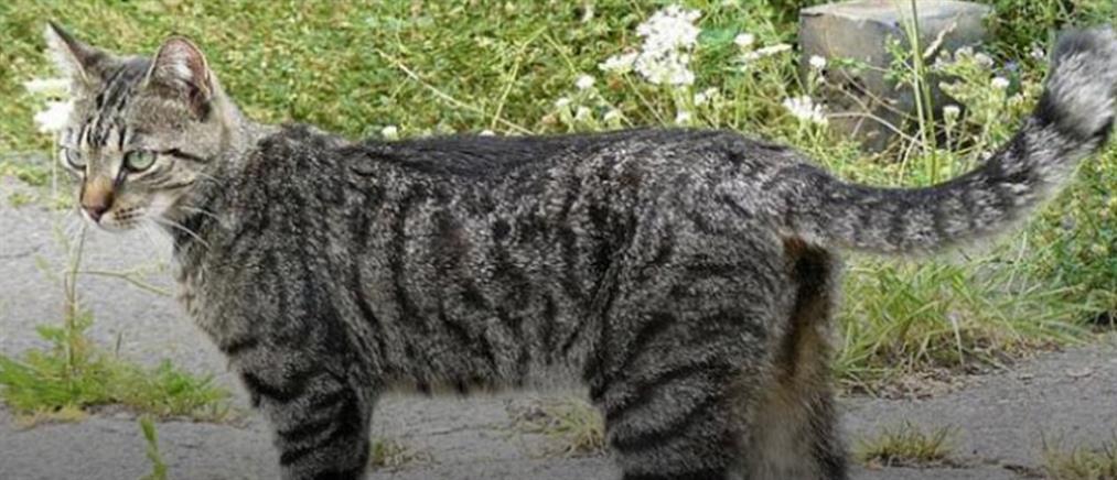 Βρήκε την χαμένη γάτα του 950 χιλιόμετρα μακριά!