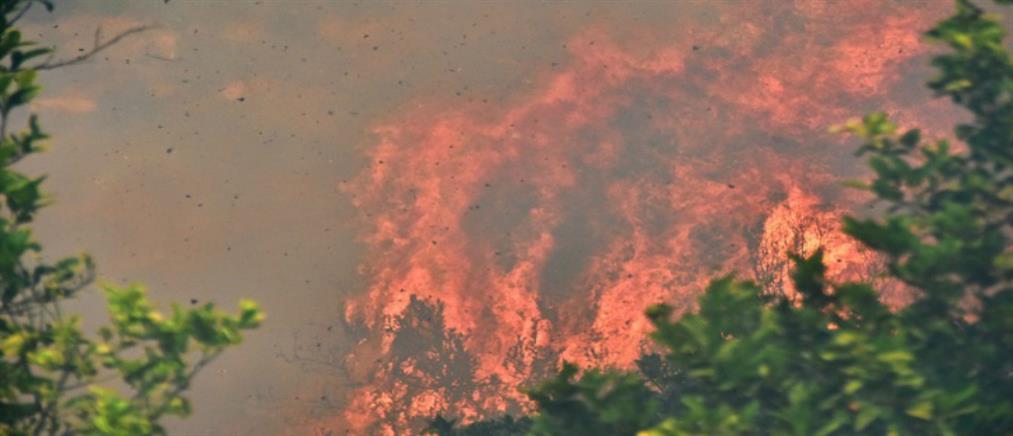 """Πρόστιμο """"μαμούθ"""" σε φοιτητές που προκάλεσαν γιγαντιαία πυρκαγιά κατά λάθος"""