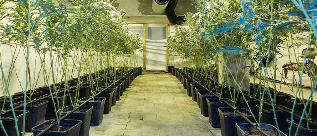 Είχαν μετατρέψει βίλες σε φυτώρια κάνναβης με κέρδη εκατομμυρίων ευρώ!