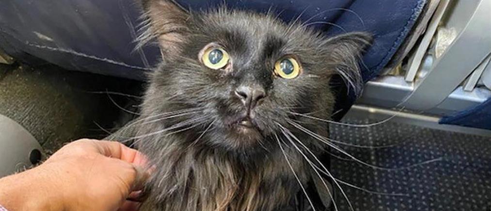 Βρήκε μετά από 5 χρόνια τη χαμένη γάτα του (εικόνες)
