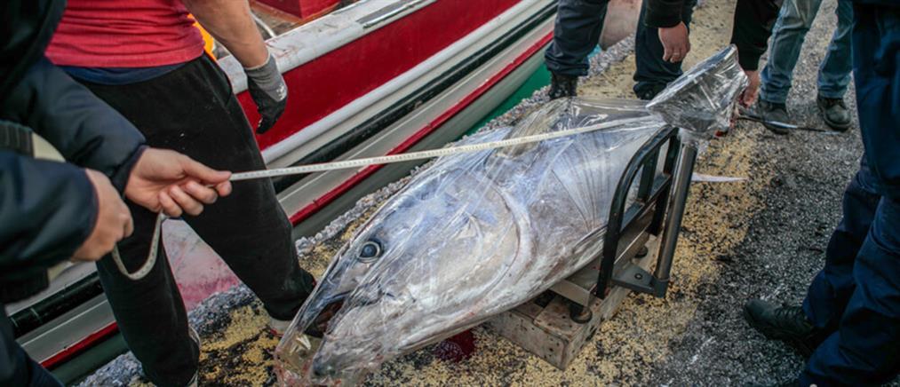 """Ψαριά """"μαμούθ"""" – Χρειάστηκε γερανός για να την ξεφορτώσουν! (εικόνες)"""