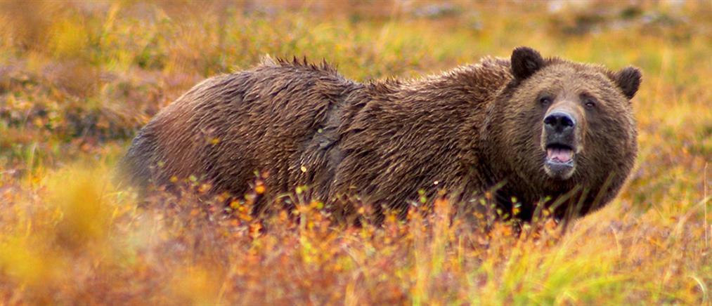 Αρκούδα «ανοίγει» Ι.Χ. στο Νιου Χαμσάιρ