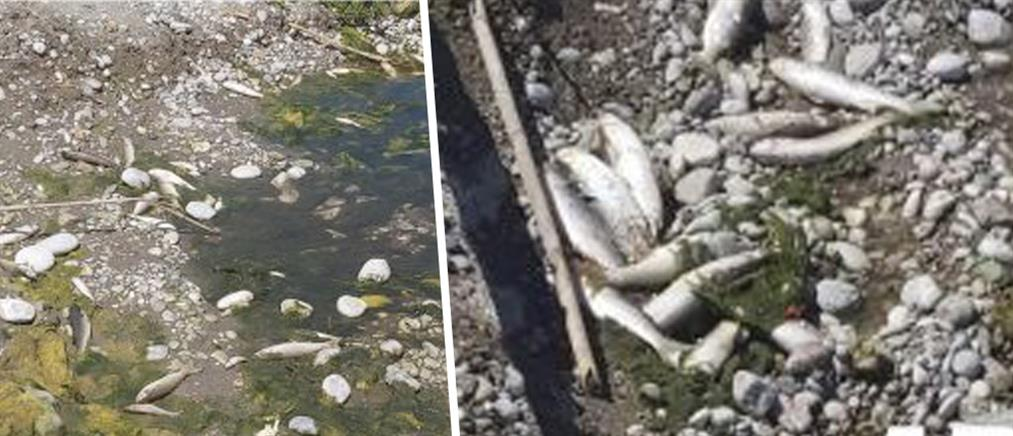 Γέμισε νεκρά ψάρια η Κρεμαστή (εικόνες)