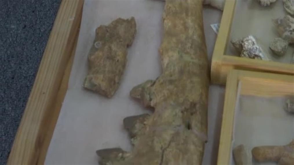 Απολίθωμα τετράποδης φάλαινας ανακαλύφθηκε στην Αίγυπτο!