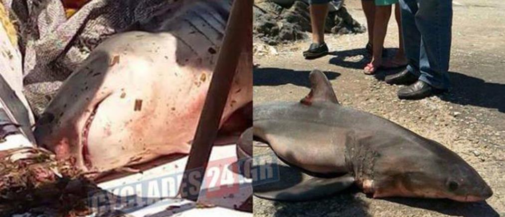 Ψαράς στη Σύρο έπιασε λευκό καρχαρία (φωτό)