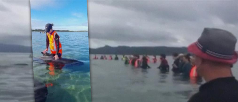 """Ανθρώπινη """"αλυσίδα"""" για να σωθούν φάλαινες (βίντεο)"""