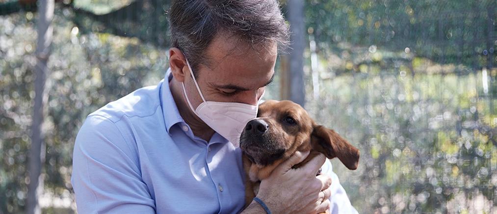 Πίνατ: η ιστορία του πρώτου πρωθυπουργικού σκύλου