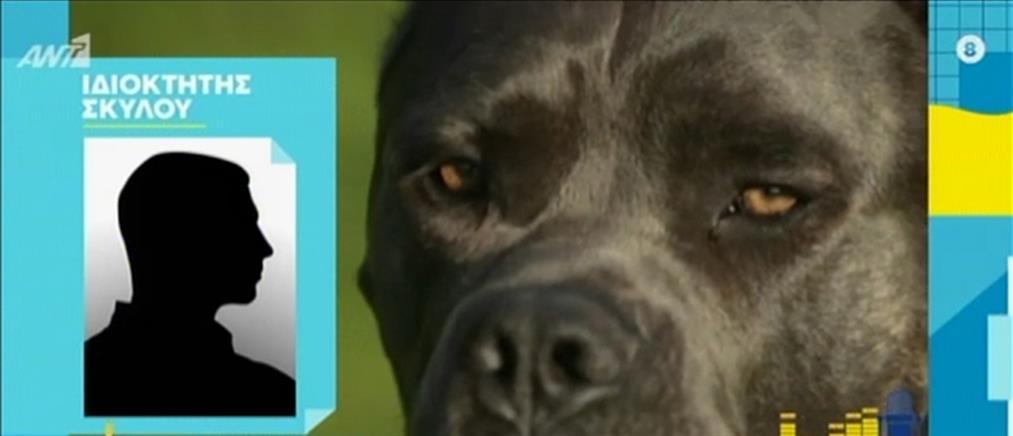 Αποκλειστικά στον ΑΝΤ1 ο ιδιοκτήτης των σκυλιών που επιτέθηκαν στον 9χρονο (βίντεο)