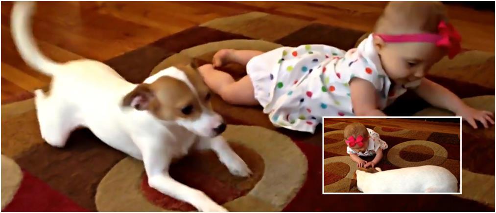 Σκυλάκι προσπαθεί να μάθει σε μωράκι να μπουσουλάει...