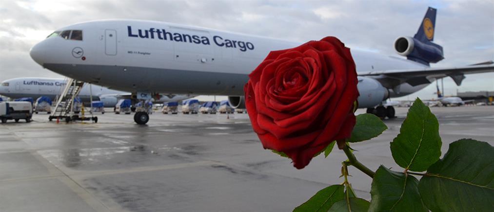 Ο έρωτας ναύλωσε έκτακτες πτήσεις με… τριαντάφυλλα