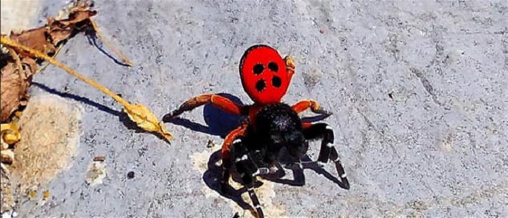 Σπάνιο είδος αράχνης εμφανίστηκε στην Πέλλα!