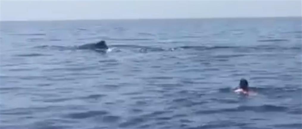 Τετ-α-τετ με μία φάλαινα βρέθηκε κολυμβητής στην Κρήτη (βίντεο)