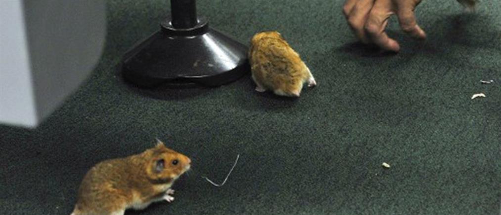 Χάος από την εισβολή ποντικιών στο Κογκρέσο