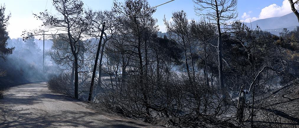 Γεράνεια Όρη - Αστεροσκοπείο: Η πιο καταστροφική δασική φωτιά της δεκαετίας
