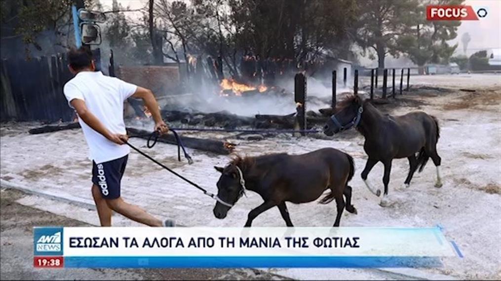 Φωτιά στην Βαρυμπόμπη: Κάηκαν πολλά ζώα – Σώθηκαν τα άλογα