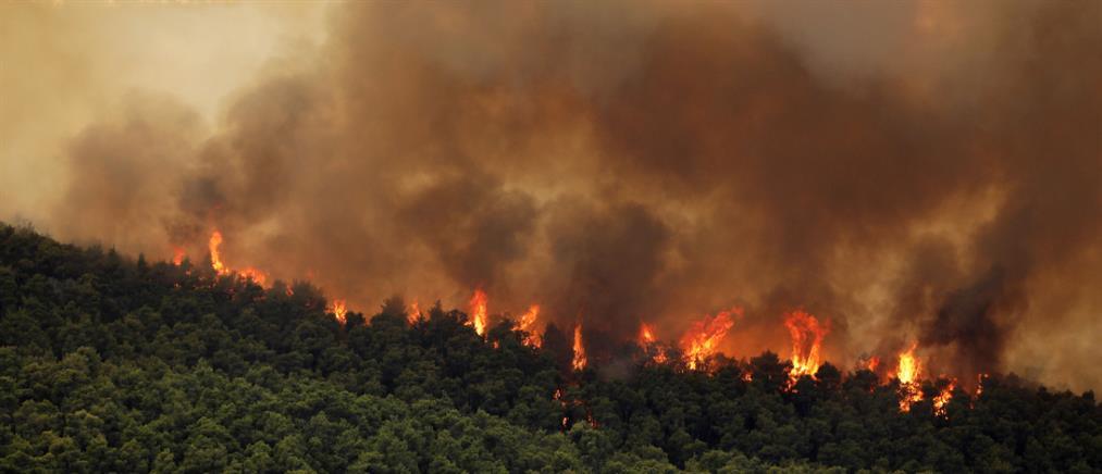 Εμπρησμοί: Μπαράζ συλλήψεων για φωτιές σε όλη τη χώρα