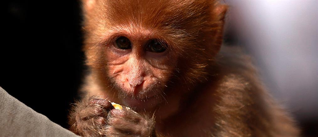 Μαϊμού σκότωσε μωρό 4 μηνών!
