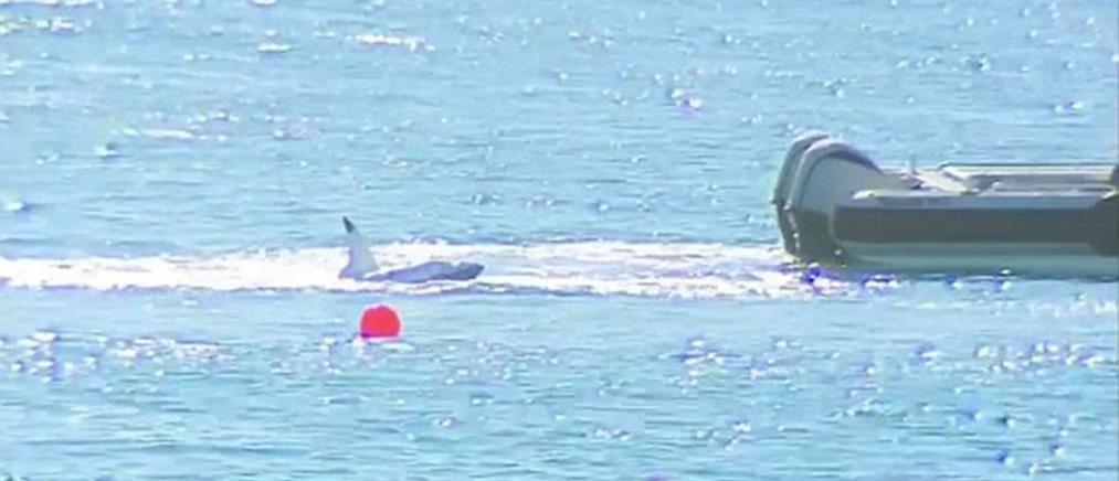 """Αυστραλία: """"επιτήρηση"""" καρχαριών με drones μετά την νέα επίθεση σε σέρφερ"""