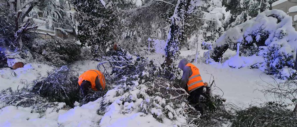 """""""Μήδεια"""": Νεκρός άνδρας που καταπλακώθηκε από δέντρο"""