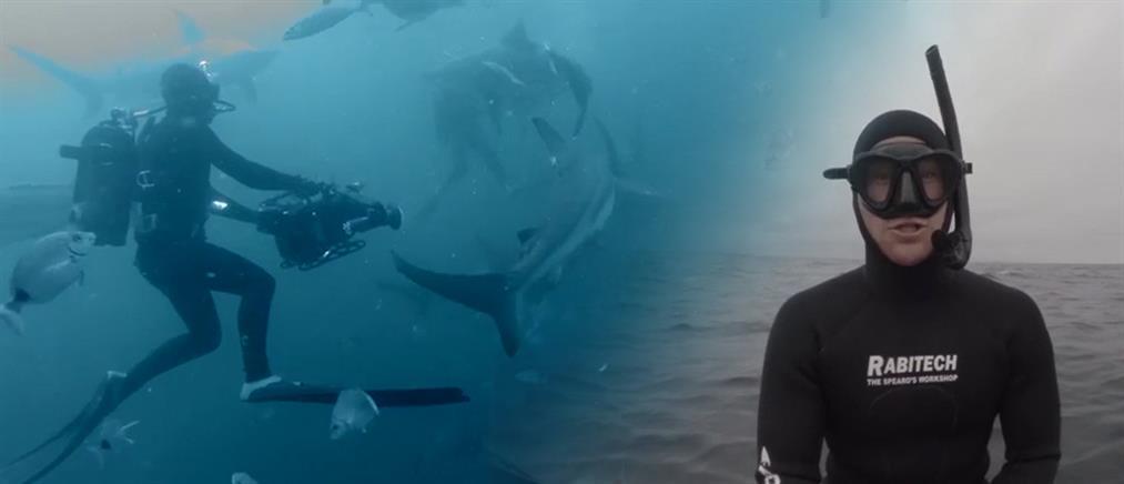 Ο γητευτής των καρχαριών