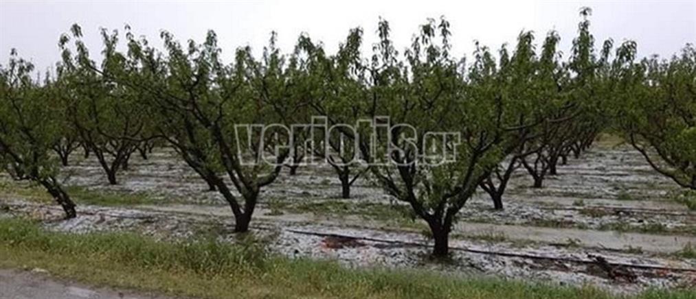 Καταστροφές από το χαλάζι στην Ημαθία (εικόνες)