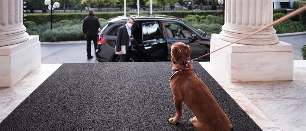 Πίνατ: Ο αδέσποτος σκύλος που υιοθέτησε ο Μητσοτάκης (εικόνες)