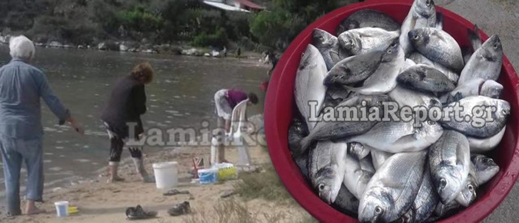 Γέμισε τσιπούρες η θάλασσα στην Φθιώτιδα και την βόρεια Εύβοια (εικόνες)