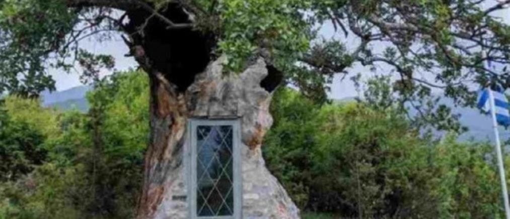 Έργο τέχνης: Εκκλησάκι έργο τέχνης του Αγίου Παϊσιου σε δέντρο 300 ετών! (εικόνες)