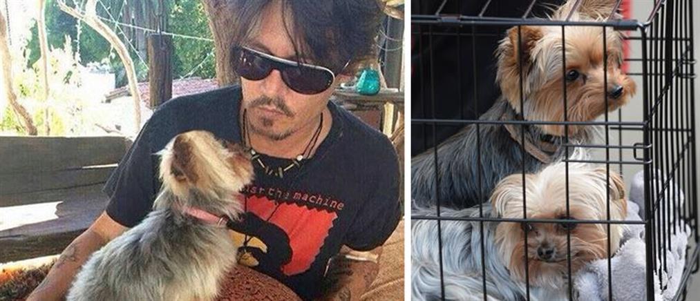 Απέλαση ή ευθανασία για τα σκυλιά του Τζόνι Ντεπ