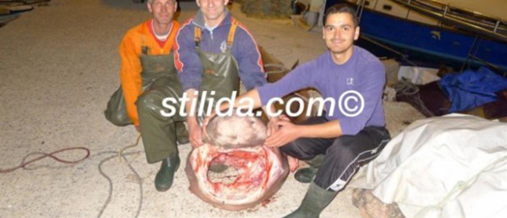 Ψάρεψαν καρχαρία 4 μέτρων στη Φθιώτιδα