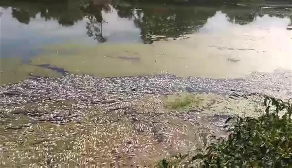 Νεκρά ψάρια ξεβράζει ο Πηνειός