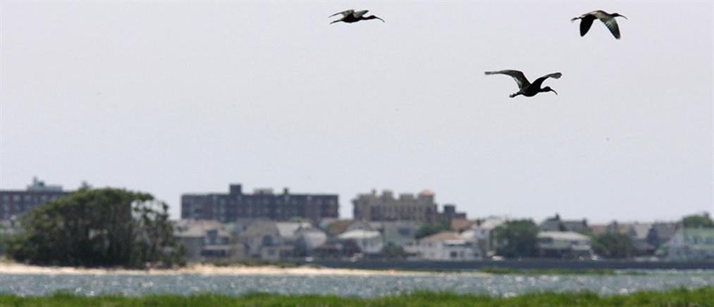 Δεκάδες χιλιάδες πτηνά θανατώθηκαν για την ασφάλεια των πτήσεων