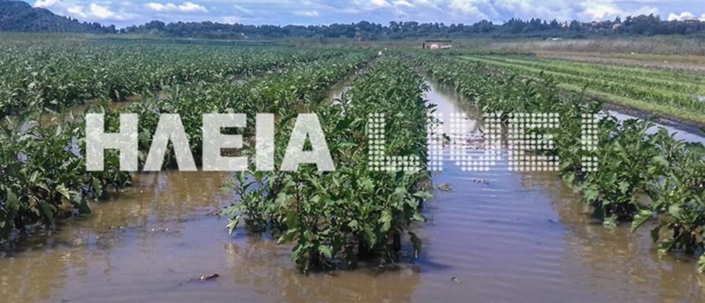 Σοβαρές ζημιές στις καλλιέργειες από τις βροχοπτώσεις (φωτο)