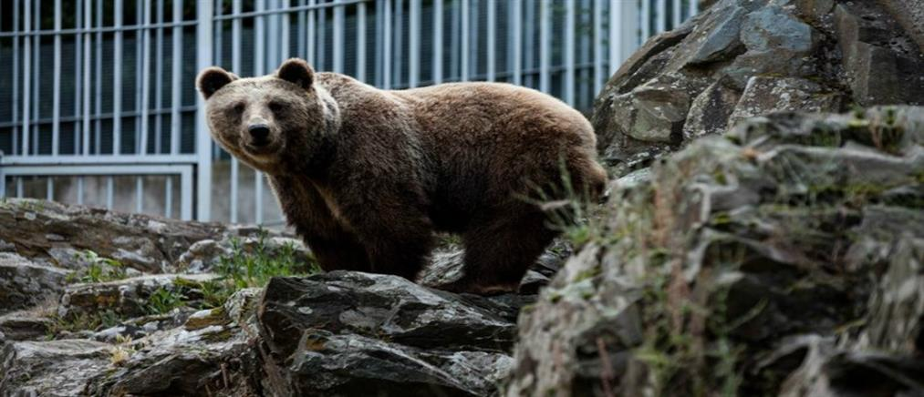 Καστοριά: νεαρός τραυματίστηκε από αρκούδα