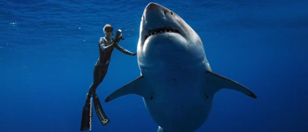 Κορονοϊός: έως 500000 καρχαρίες μπορεί να θανατωθούν για το εμβόλιο