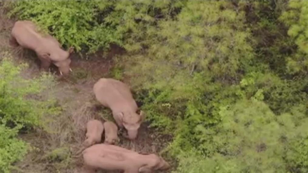 Κοπάδι με ελέφαντες περιφέρεται στην Κίνα