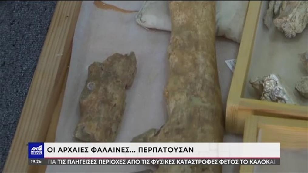 Αίγυπτος: ο πρόγονος της φάλαινας είχε πόδια και ήταν αμφίβιος