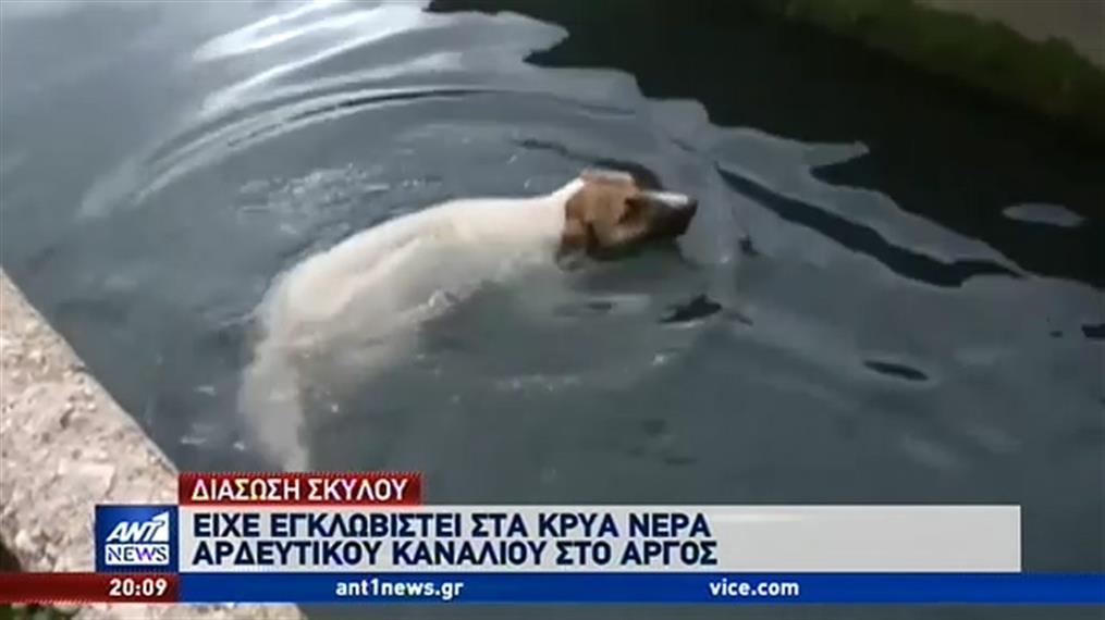 Επιχείρηση διάσωσης σκύλου από αρδευτικό κανάλι