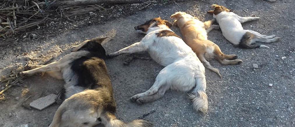 Φρίκη! Έριξε φόλα σε τέσσερα σκυλιά! (φωτο)